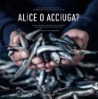 ALICE O ACCIUGA?